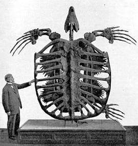 Черепаха архелон