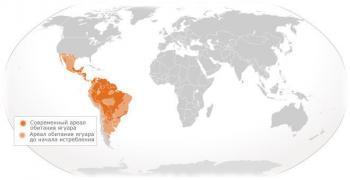 Ареал обитания ягуара