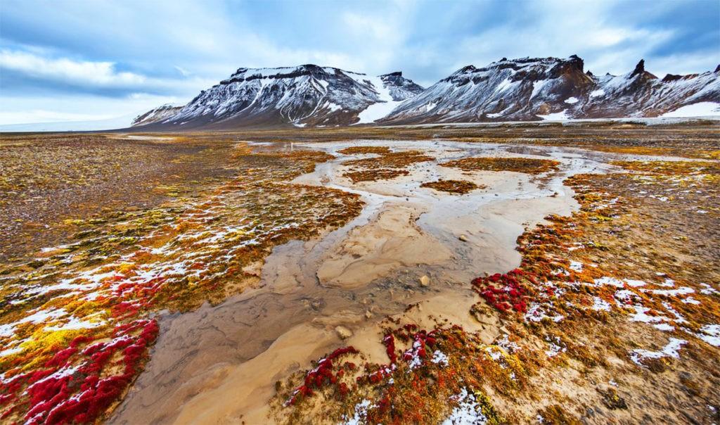 Арктическая пустыня летом