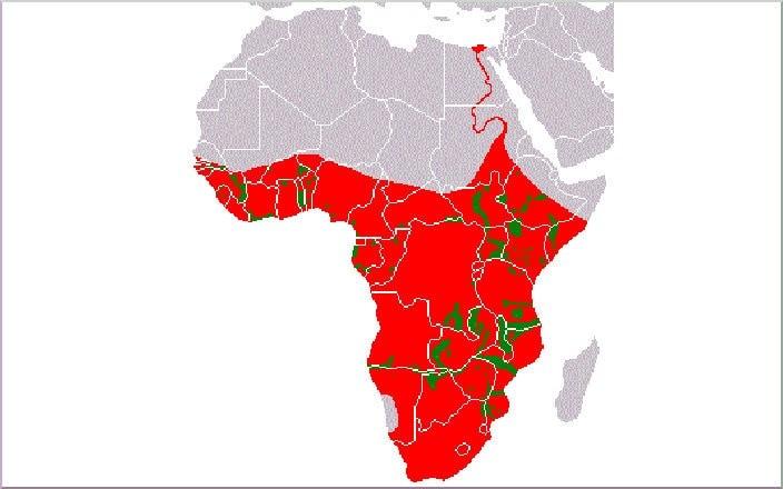 Ареал обитания бегемотов (красным- исторические места обитания, зеленым - настоящие места)