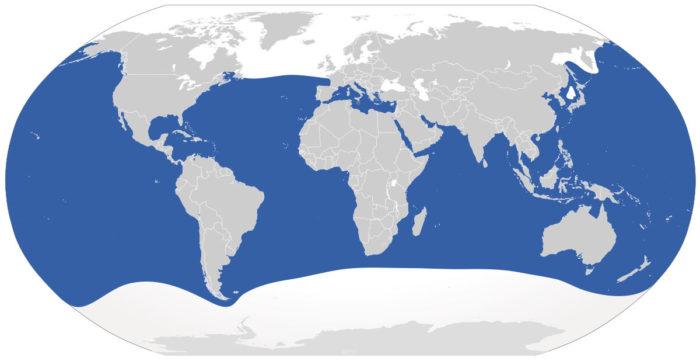 Ареал обитания большой белой акулы