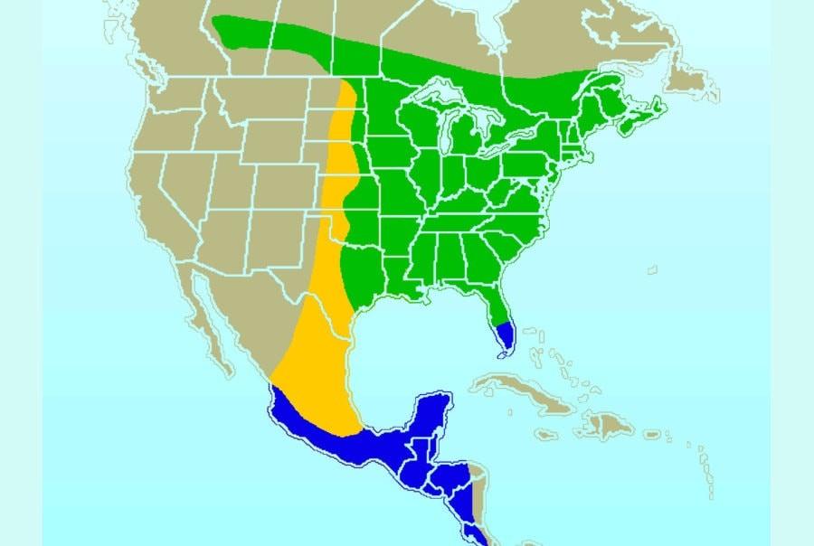 Ареал обитания колибри. Зеленым - летний ареал, синим - зимовки, желтым - миграция