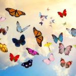 Цветные мотыльки – интересные факты