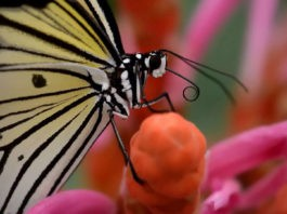 Дневные бабочки