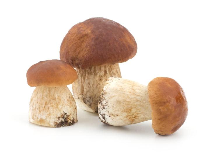 Белый гриб - интересные факты