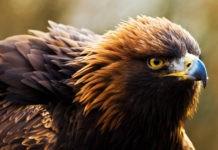 Птицы России – список, виды, название, описание, ареал, фото и видео