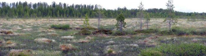Болота в Финляндии