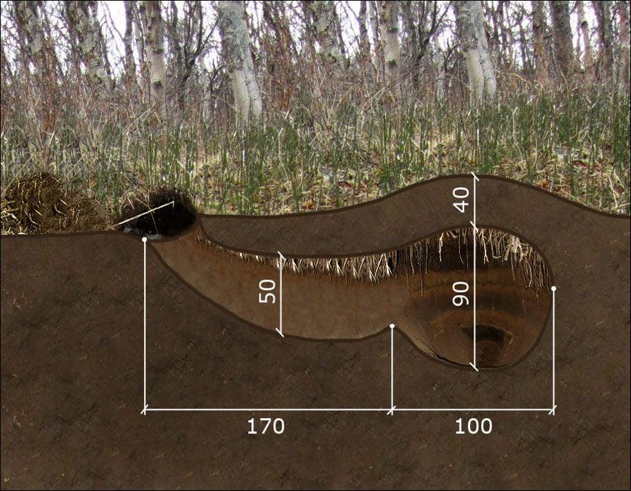 Схема берлоги медведя