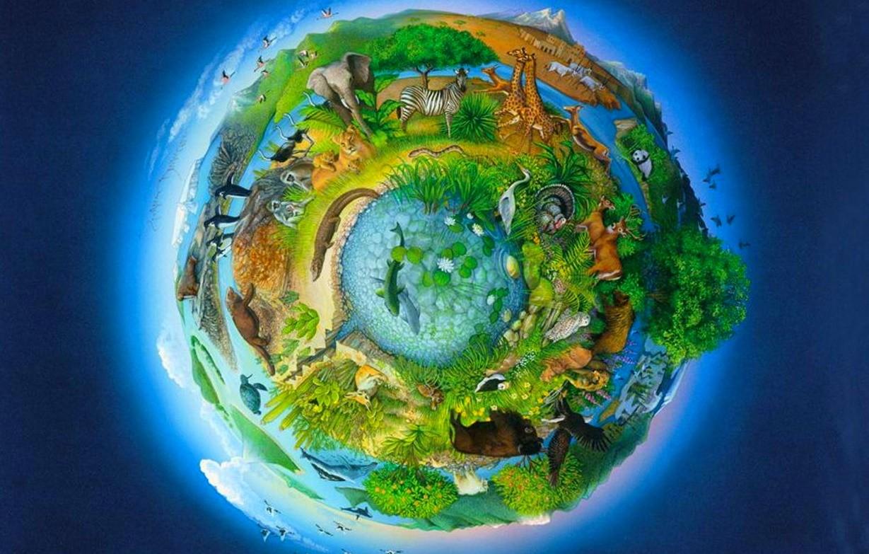 Биосфера: что такое, описание, структура, где находится, особенности, фото и видео