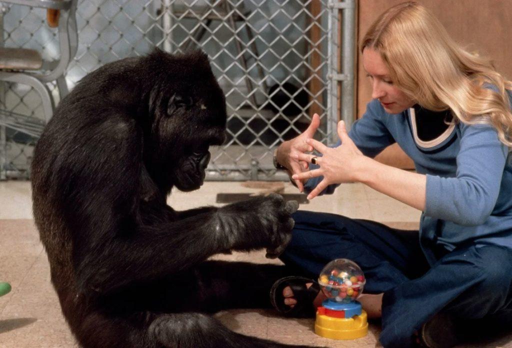 Процесс обучения обезьяны