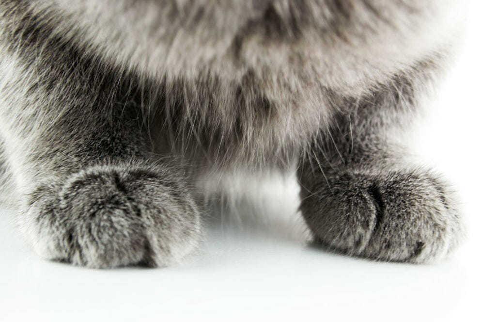 Почему кошка топчет лапками? Причины, фото и видео