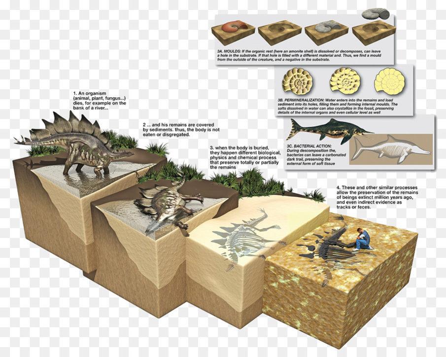 Условия создания окаменелостей