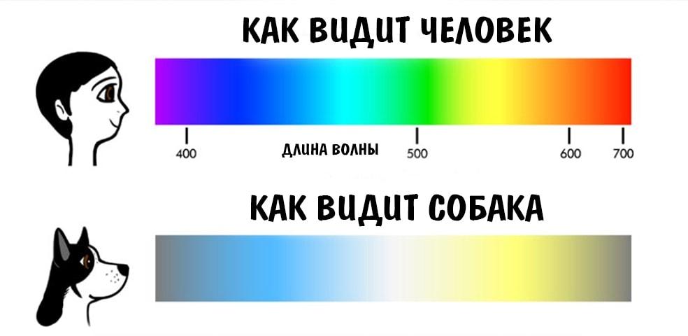 Как видят цвета люди и собаки