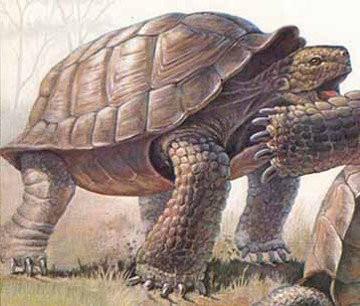 Черепахи - атланты