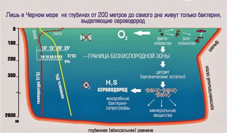Картинки по запросу сероводород в черном море
