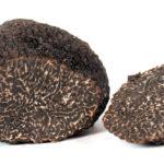 Самые гастрономически ценные грибы