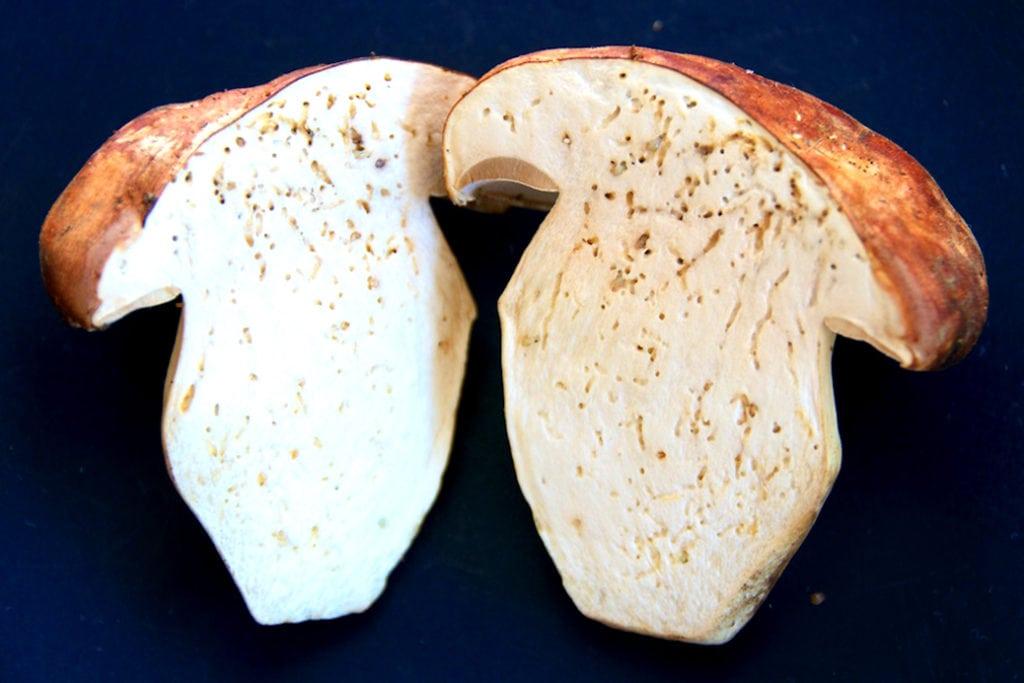 Червивый белый гриб