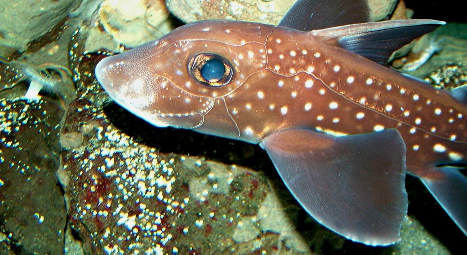 Какая рыба самая древняя?
