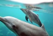 Как пьют дельфины, киты и косатки?