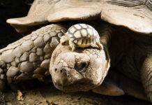 Черепахи древности и современности - интересные факты