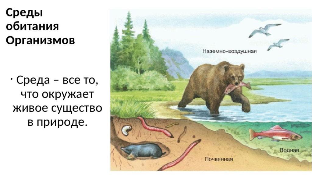 Среда обитания - что такое