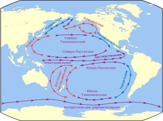 Циркуляция поверхностных вод Тихого океана