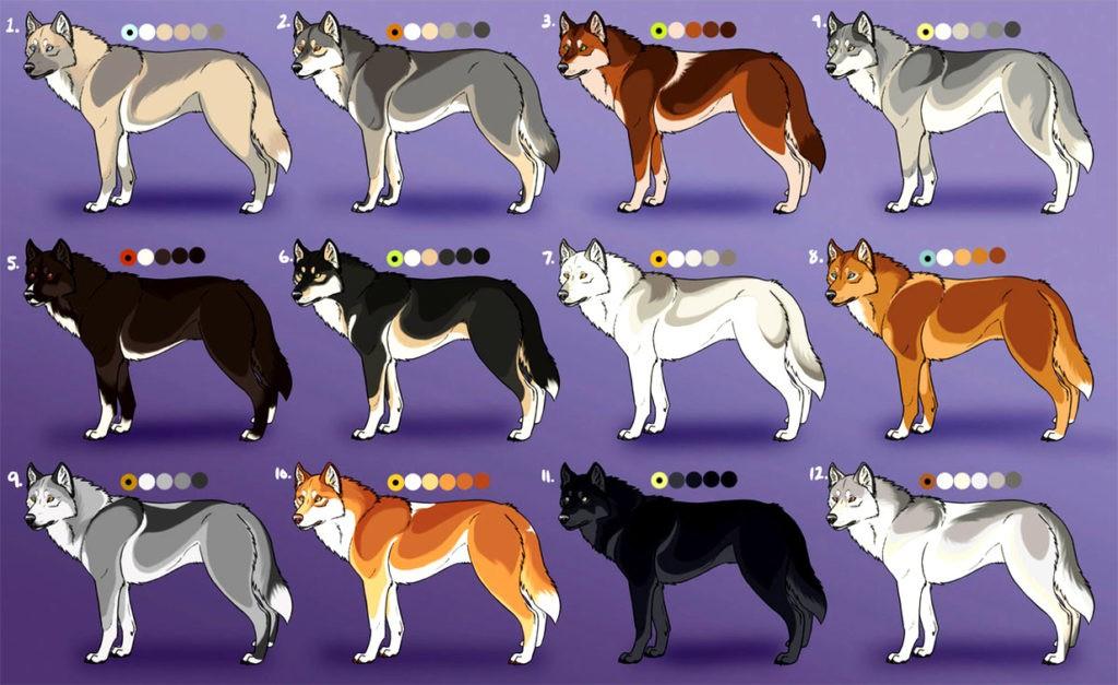 Варианты окраса волка