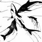 Атака на акулу
