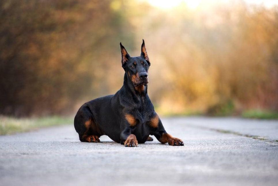 Топ-5 пород собак для охраны