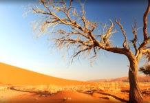 Как получают питание деревья, растущие на песке?