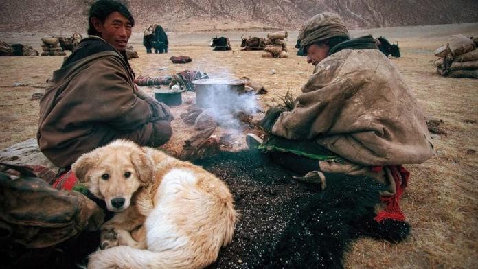 Ученые выяснили, что одомашнивание собак деформировало их позвоночник