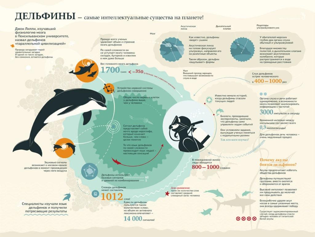 Дельфины инфографика