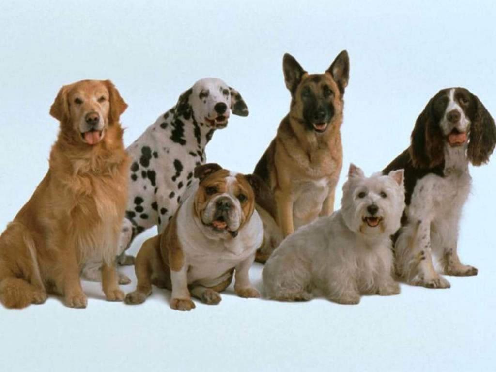 Домашние животные: собаки