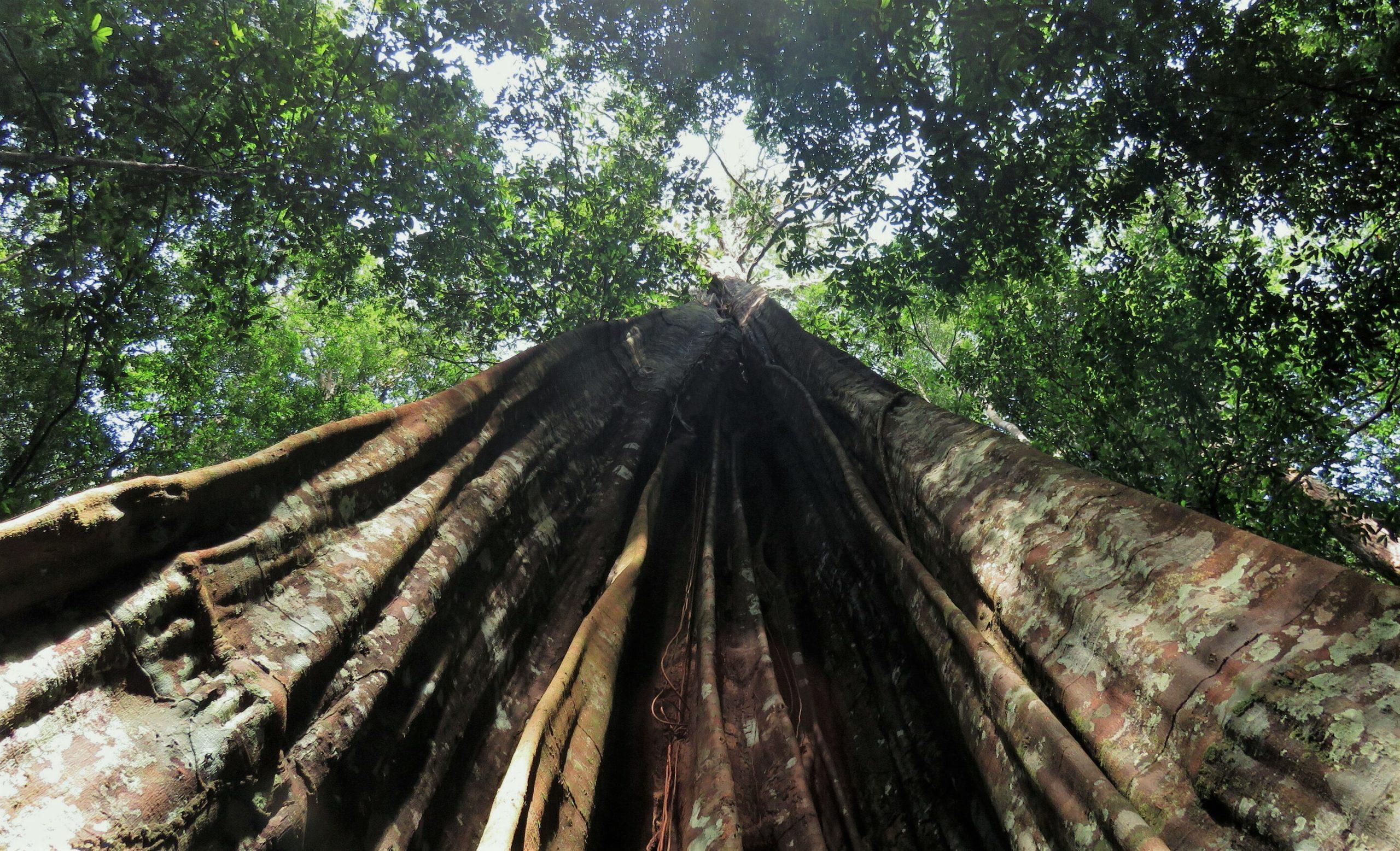 Изучена способность деревьев адаптироваться к засухе