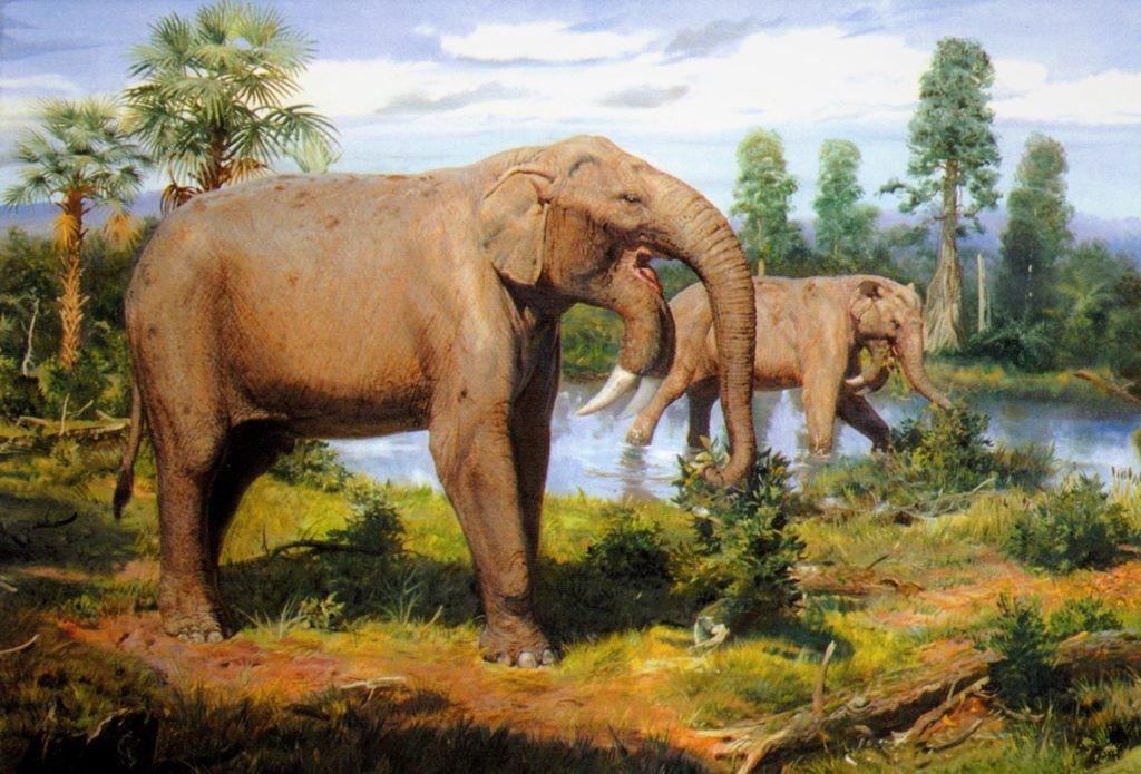 Дейтонерии - первые предки слонов