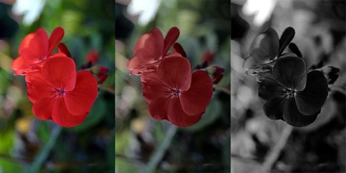 Модель эффекта Пуркине — цветок герани, видимый в нормальном ярком свете, в сумраке, и ночью