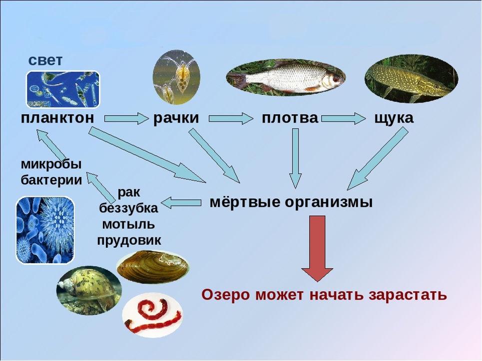 Пример: экосистема озера