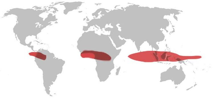 Экваториальный климатический пояс на карте мира