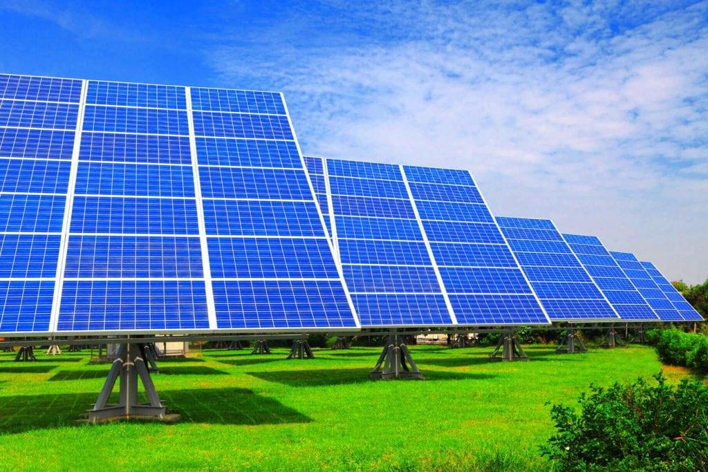 Растения, наподобие солнечных панелей, преобразовывают энергию света