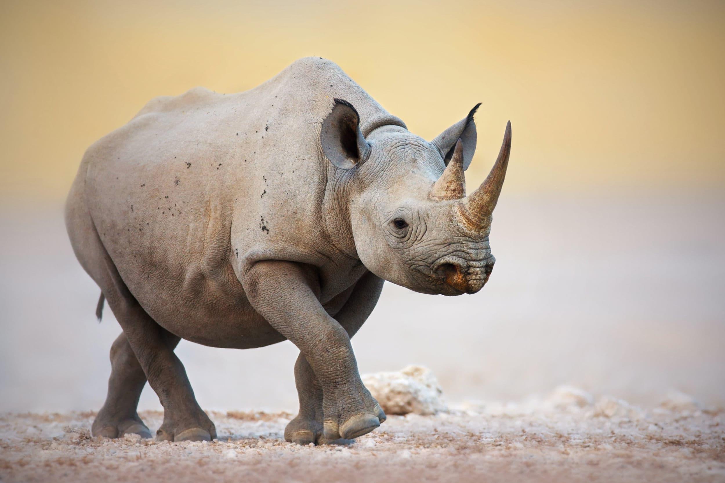 Почему некоторые виду животных эволюционируют, а другие нет?