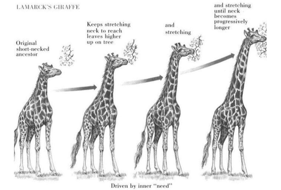 Эволюция жирафа