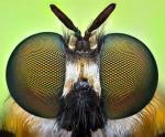 Фасеточные глаза насекомых