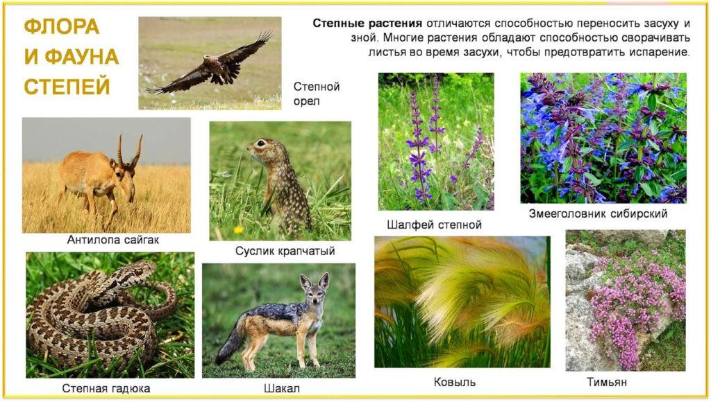 Флора и фауна степи