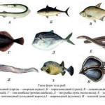 Форма тела рыб