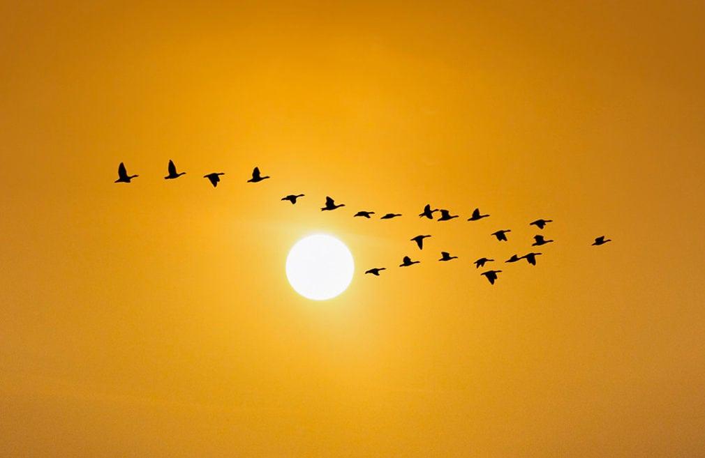Где пьют птицы, летящие через Сахару?