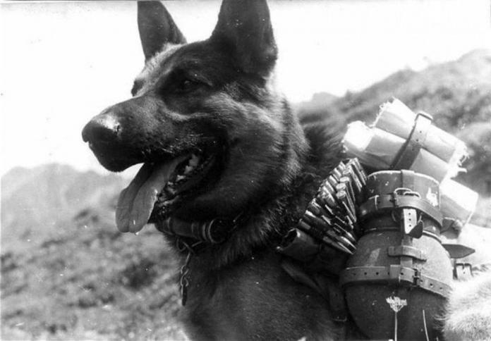 Самые героические поступки собак