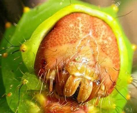 Глаза гусеницы