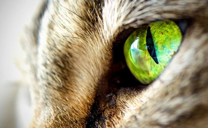 Как определяют, какие цвета видят животные?
