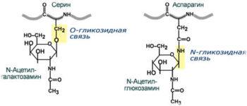 Гликопротеины