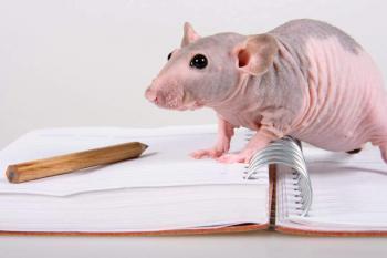 Голая крыса Сфинкс